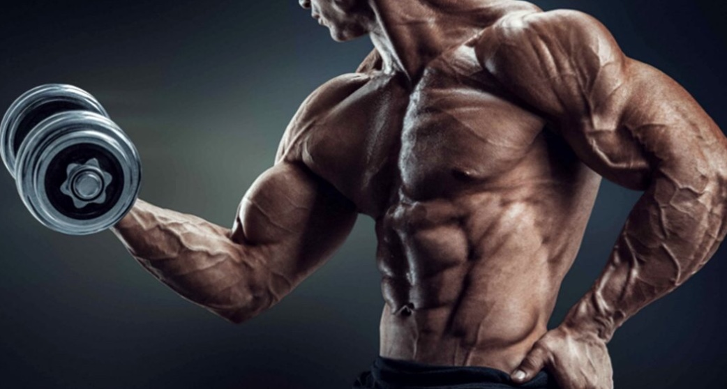 Let's Go to Know The Basic Principles of Bodybuilders